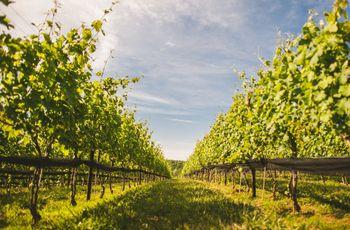 7 Stunning Santa Barbara Vineyard & Winery Wedding Venues