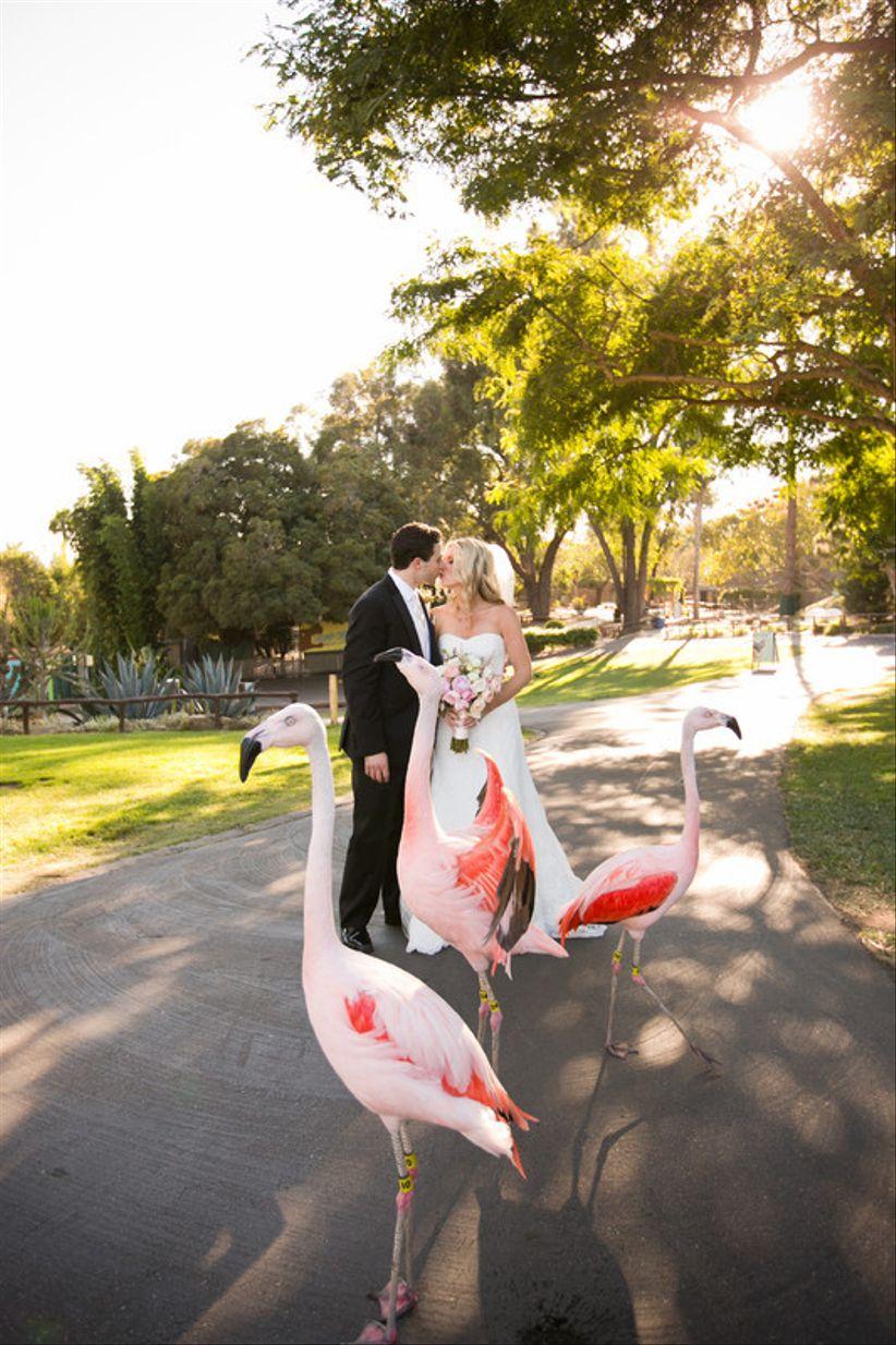 bride and groom posing at Santa Barbara Zoo with flamingos