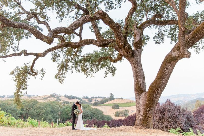 bride and groom pose under old oak tree with vineyard views in Napa Valley