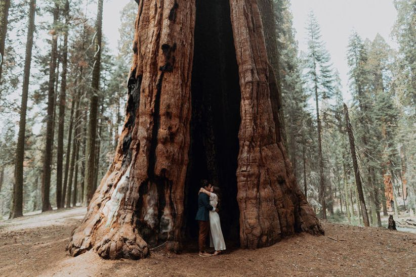 Redwood forest wedding photo ideas - couple standing in redwood tree