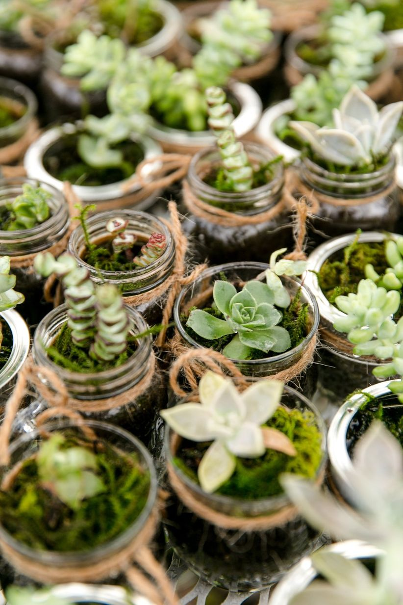 mini succulent wedding favors in glass jars