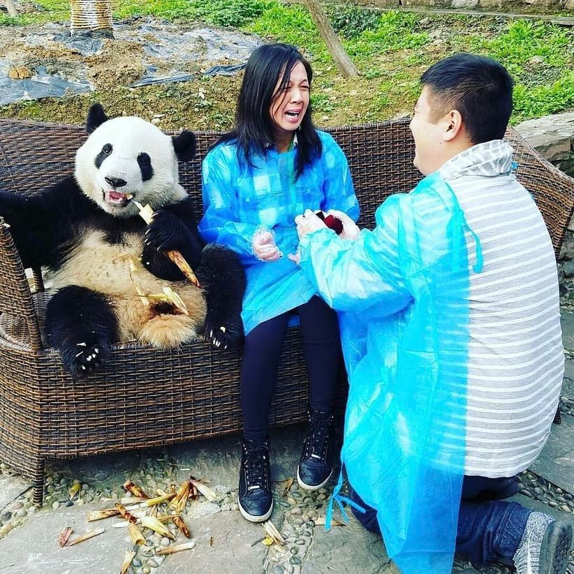 proposal with panda bear in China