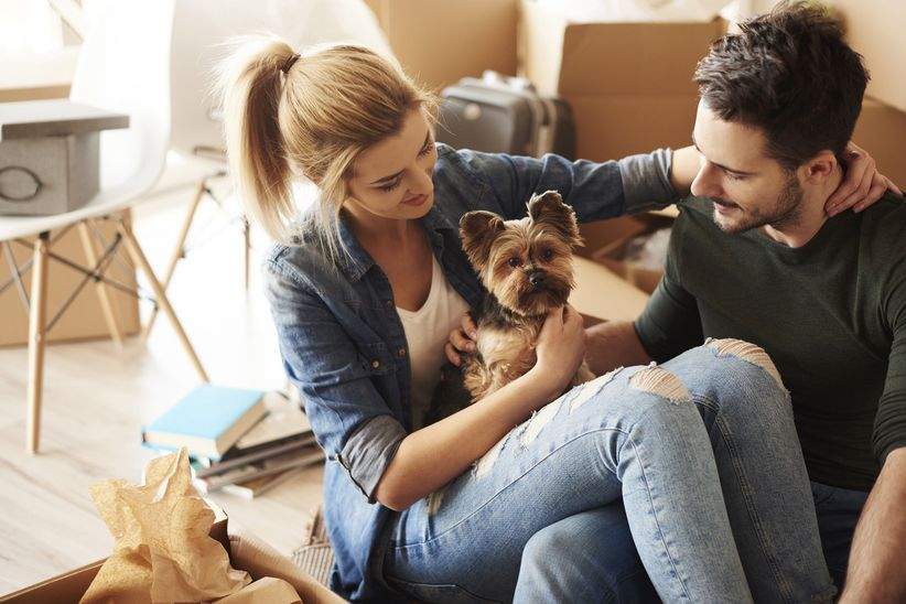 couple playing with dog while sitting at home on couch