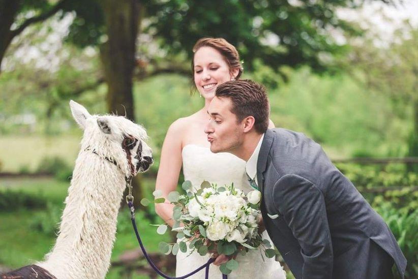 llama or alpaca farm