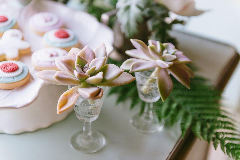succulents in antique dessert glasses