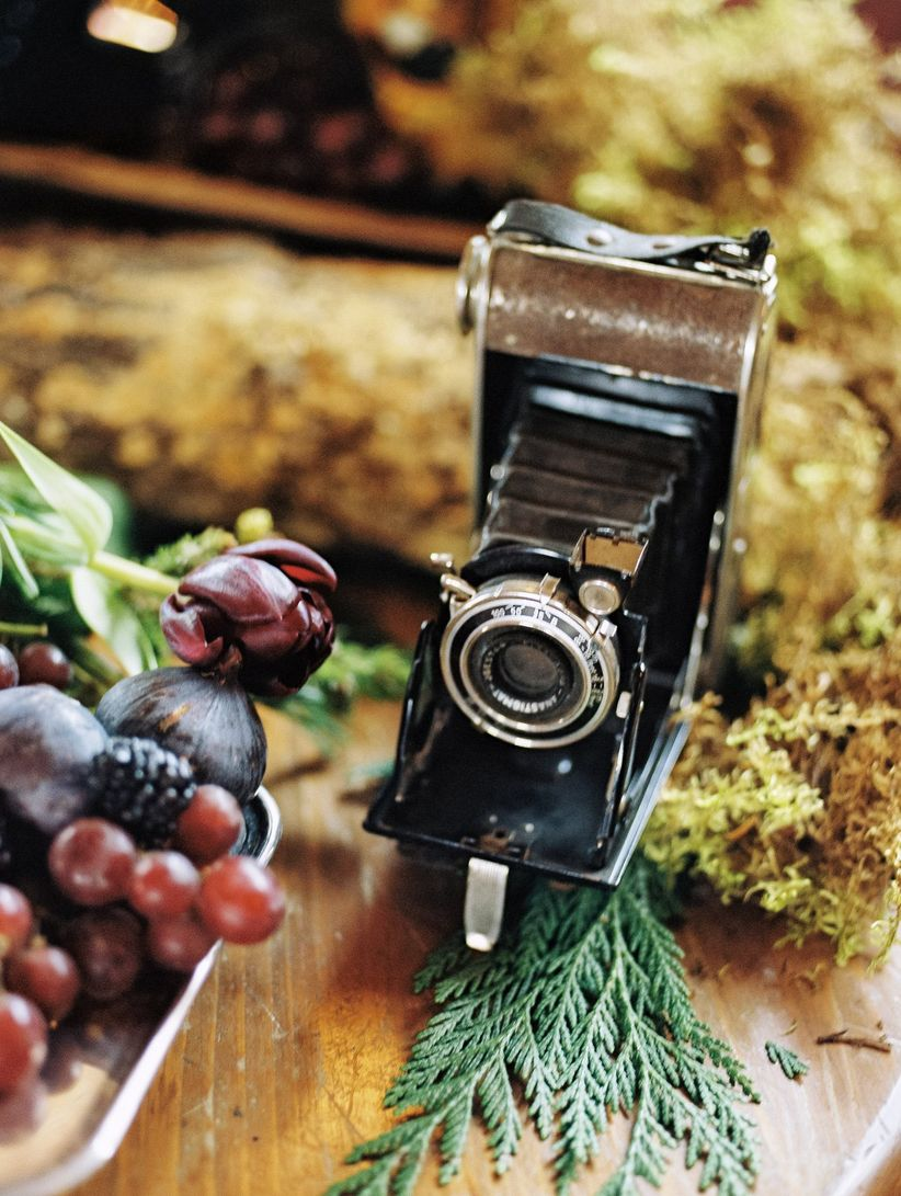 vintage polaroid camera on display with moss and and fruit