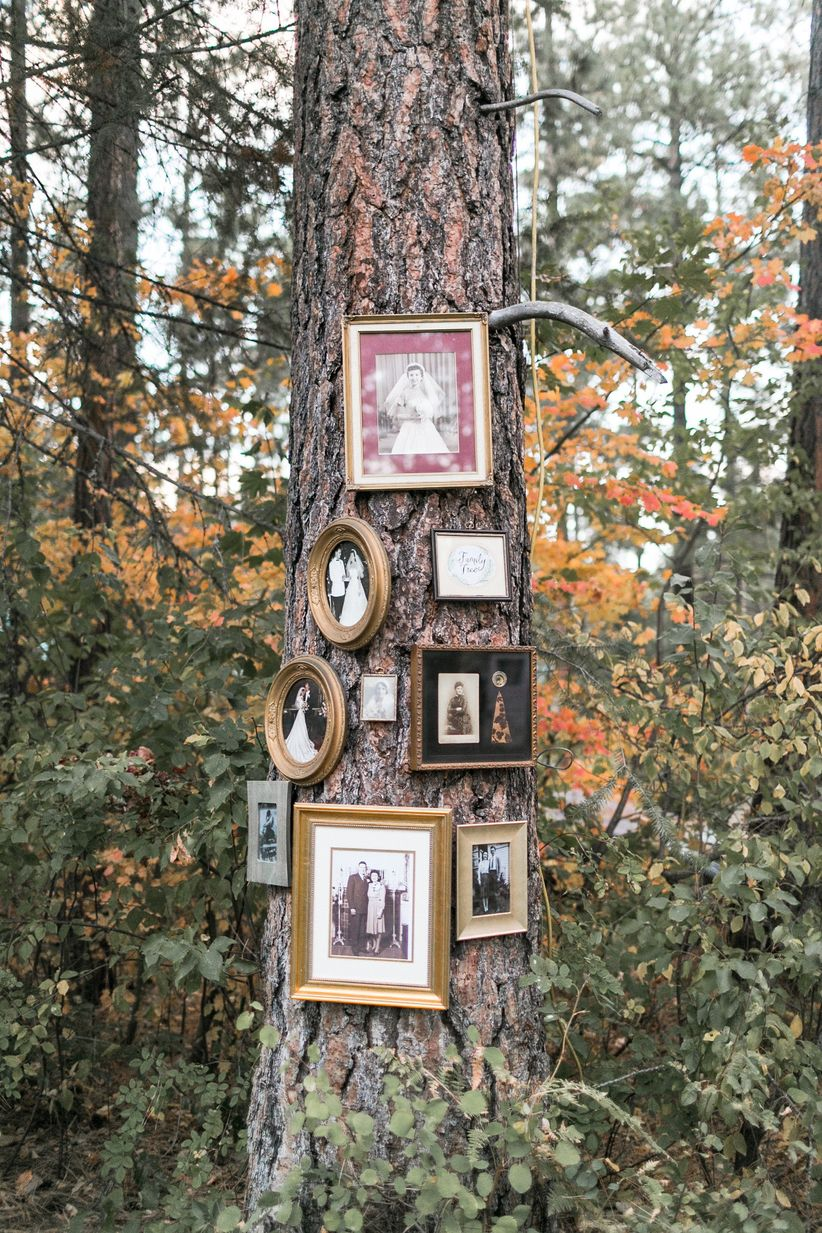 picture frames on tree