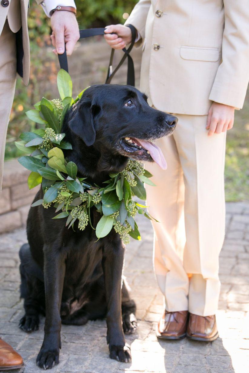dog wearing greenery wreath