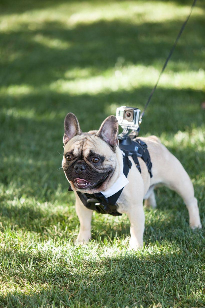 dog wearing video camera