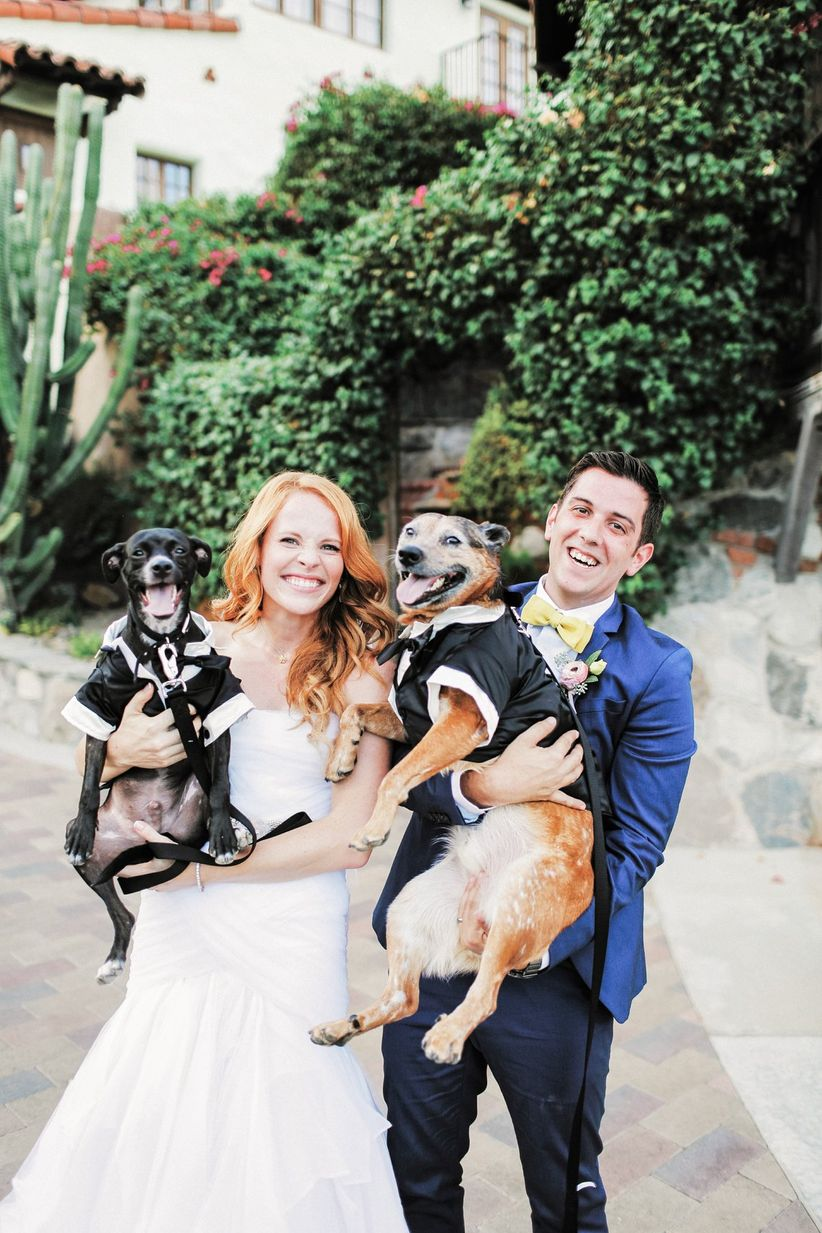 two dogs in tuxedos with couple