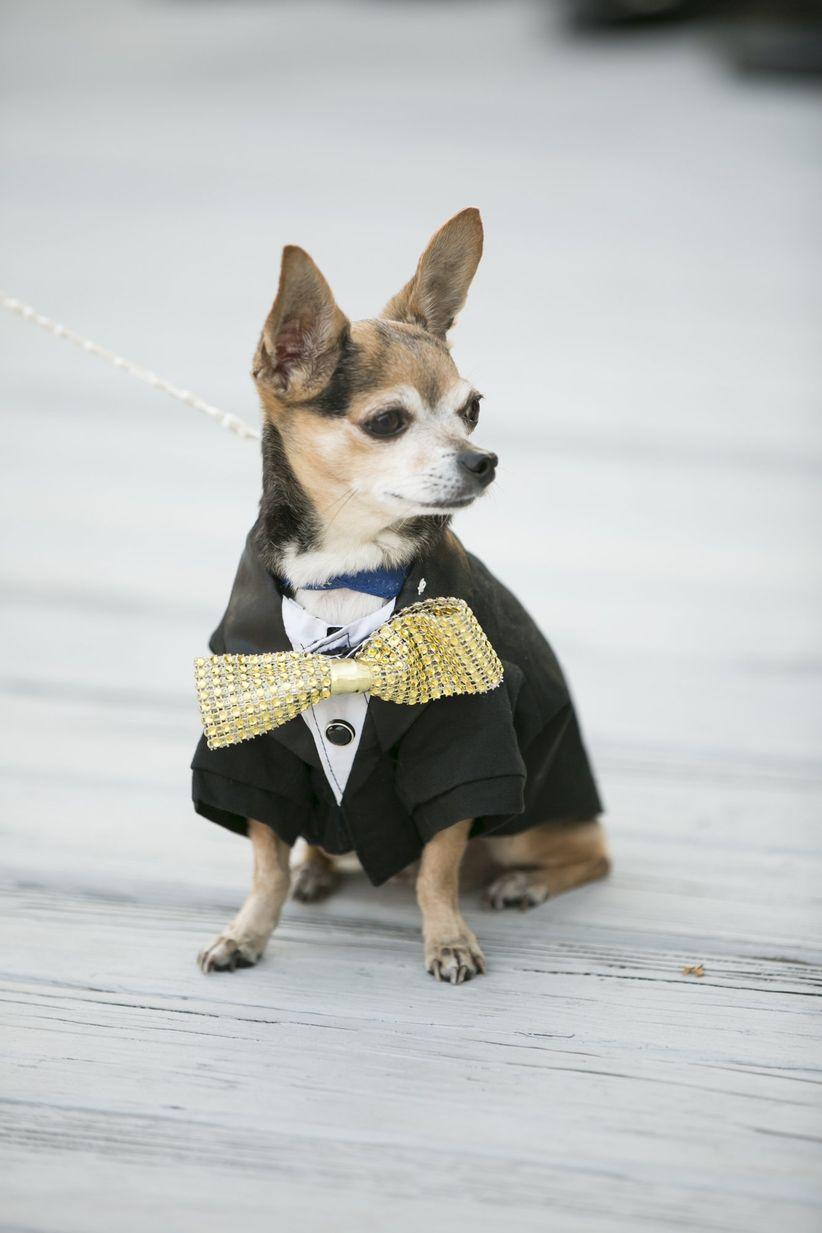 dog wearing tuxedo