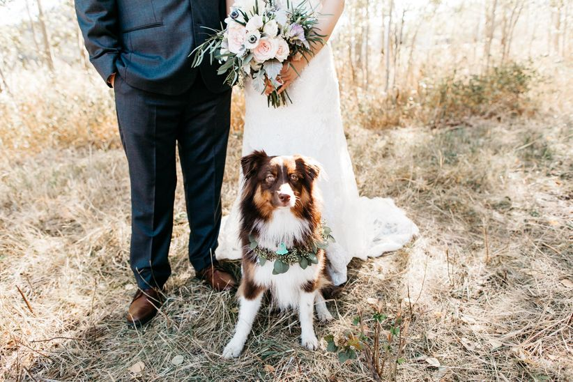 dog wearing greenery wreath with couple