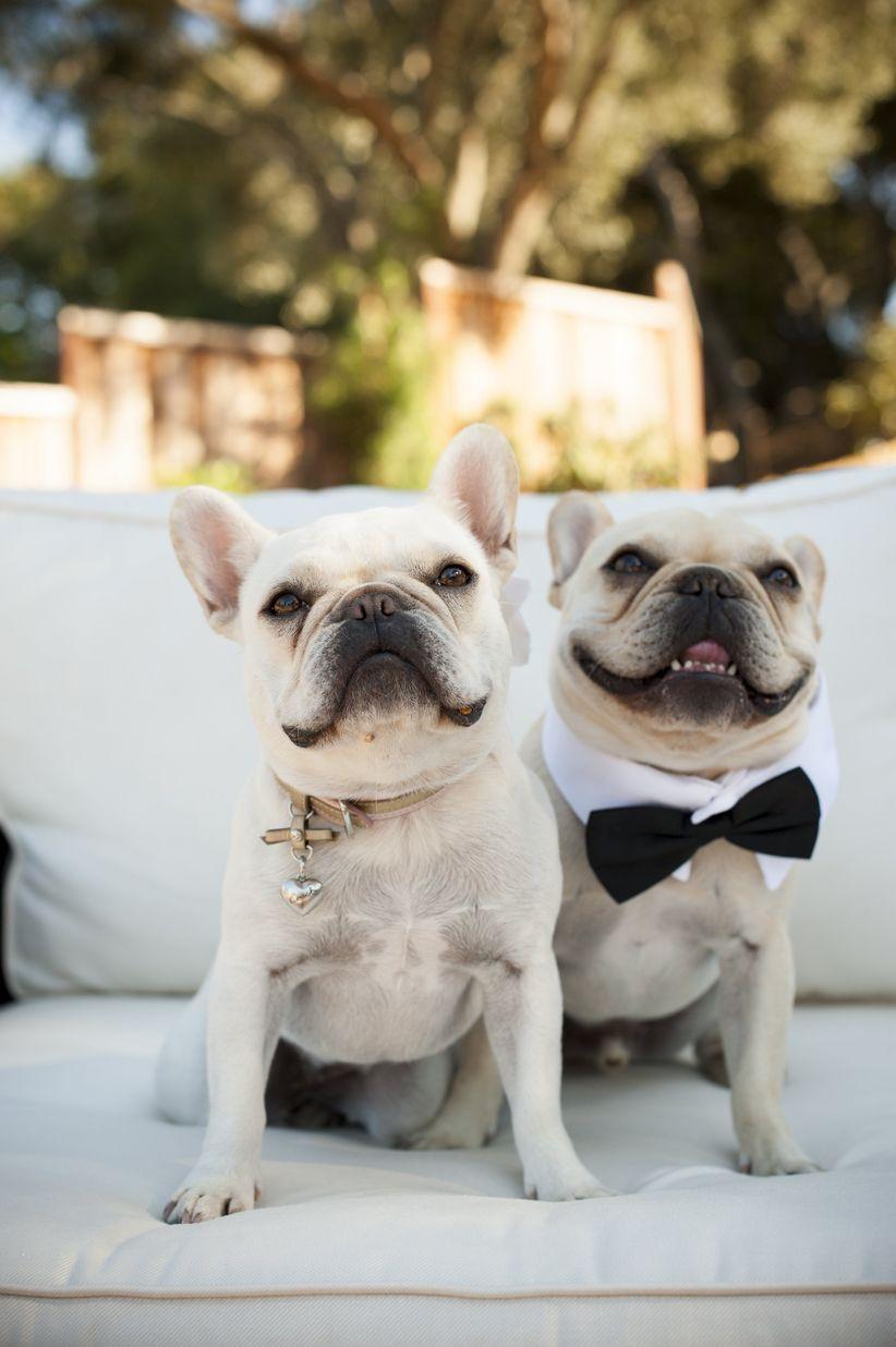 wedding bulldogs