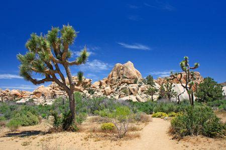 11 Joshua Tree Wedding Venues in the Heart of the Desert