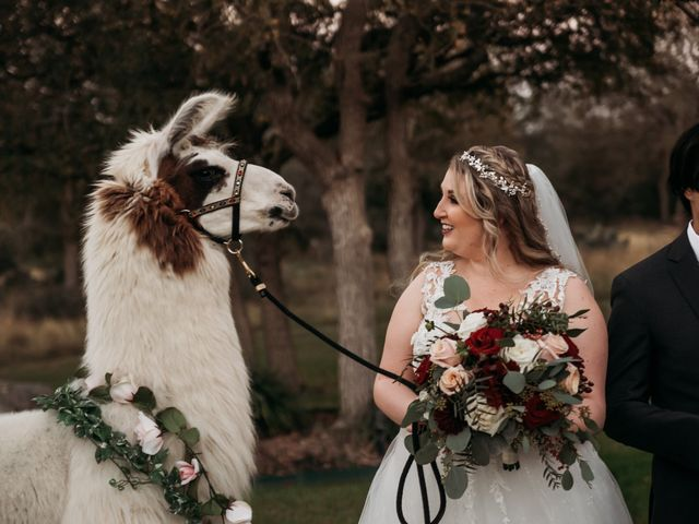 Christian and Cassidy's Wedding in New Braunfels, Texas 67