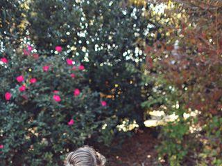 Ashlee and Jacob's Wedding in Springville, Alabama 10