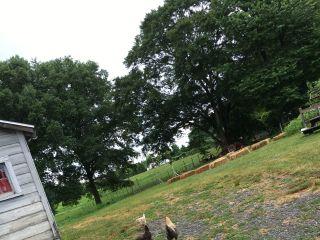 Phillies Bridge Farm 4