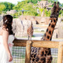 Zoo Knoxville 13