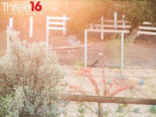 Three16 Photography 5