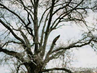 Magnolia Pines 4