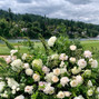 Sophisticated Floral Designs {Weddings + Events} 11