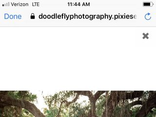 Doodle Fly Photography 6