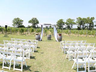 Sanctuary Vineyards 3