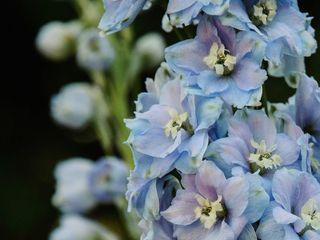 The Flower Diva 5