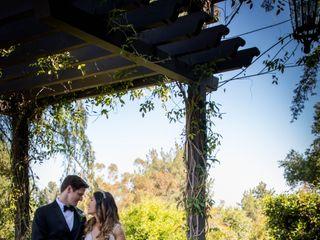 Olive Grove Photo 1