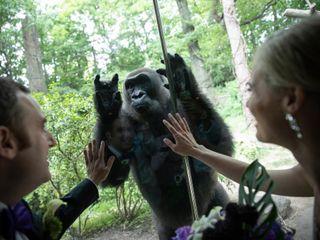 Bronx Zoo 2