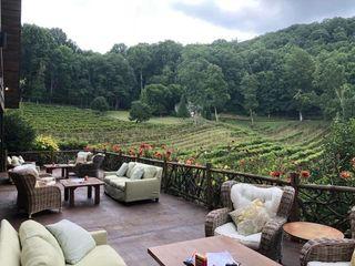 The Vineyard at 37 High Holly 5