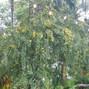 Bamboo Gallery 12
