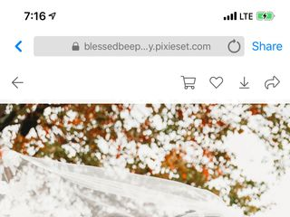 Blessed Bee Photography 3
