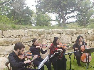 Cello Vida 3