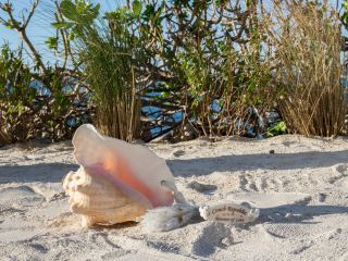 Conch Concierge Weddings 4
