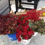 WholeBlossoms.com 12