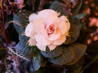 Floral V Designs 6