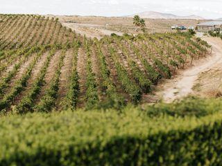 Callaway Vineyard & Winery 5
