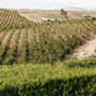 Callaway Vineyard & Winery 9
