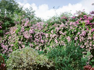 Sunken gardens 1