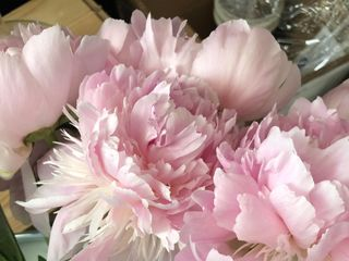 Lehrer's Flowers 1
