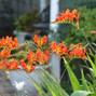 Lillian Gardens 28