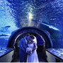 Newport Aquarium 23