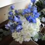 Fallon's Flowers 25