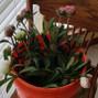 WholeBlossoms.com 15