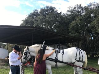 Sweet Southern Horse & Carriage 4