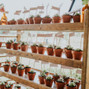 Loblolly Organic Farm 24