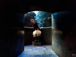 Ian Chin Photography 3