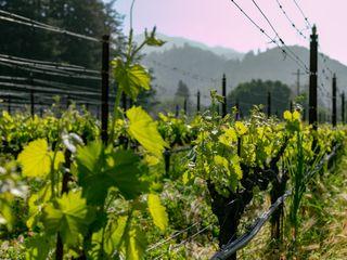 Landmark Vineyards 5