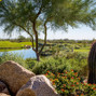 Grayhawk Golf Club 10